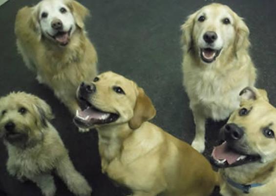 dog-training-sussex-county-nj