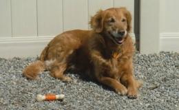 home_Dog Daycare