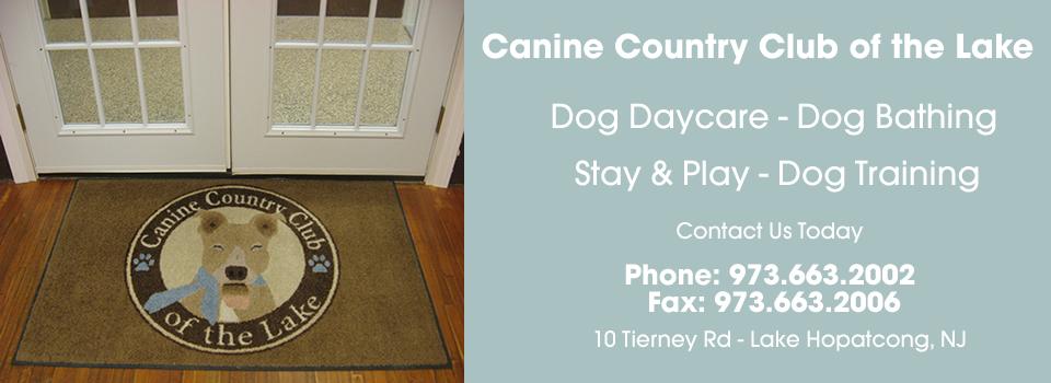 doggy-day-care-nj