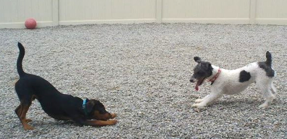 dog-daycare-morris-county-nj