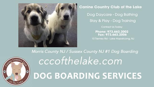 Dog Vacation Sitting Lake Hopatcong NJ